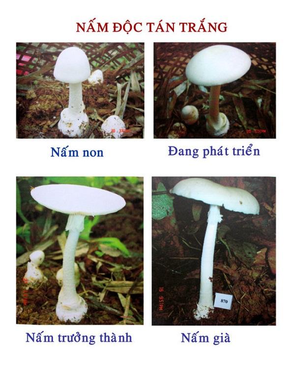 Nấm độc ở Việt Nam